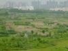 6-Shanghai 2012_huertas en el límite de Pudong